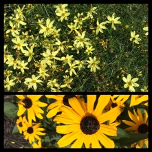 New Phototastic Collage Yellow (01)